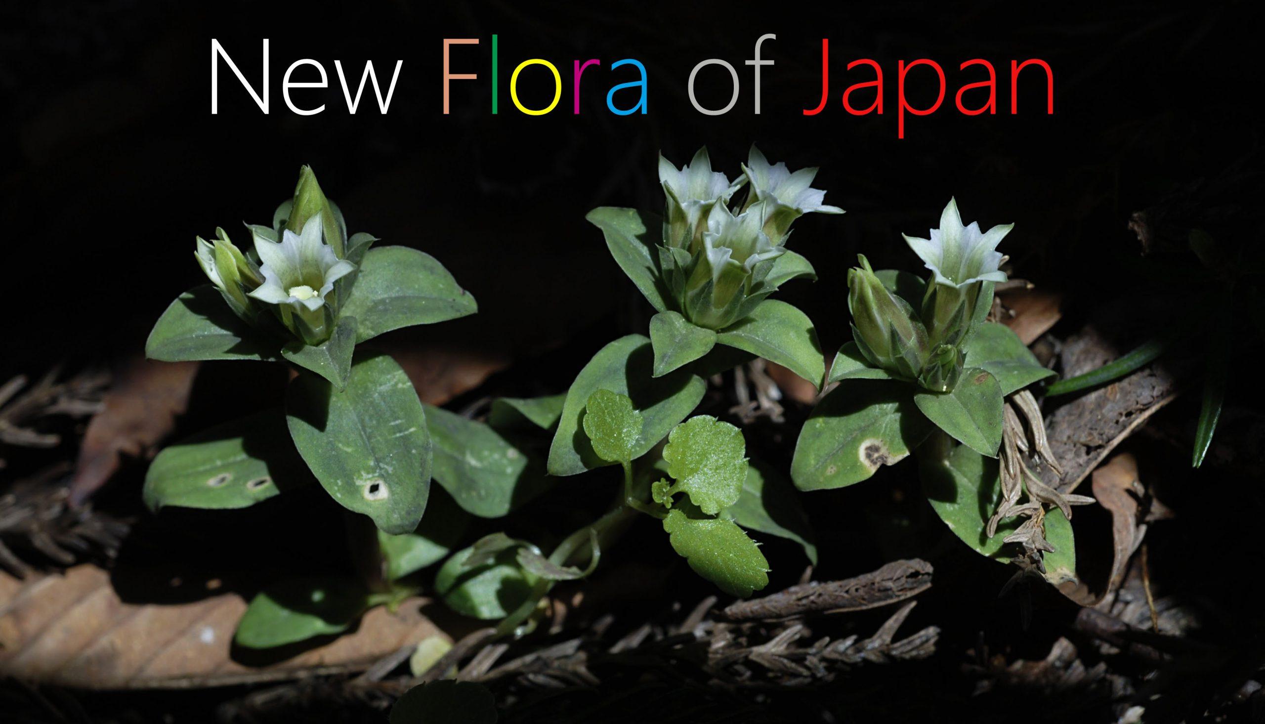 """スライドジャーナル """"New Flora of Japan"""""""